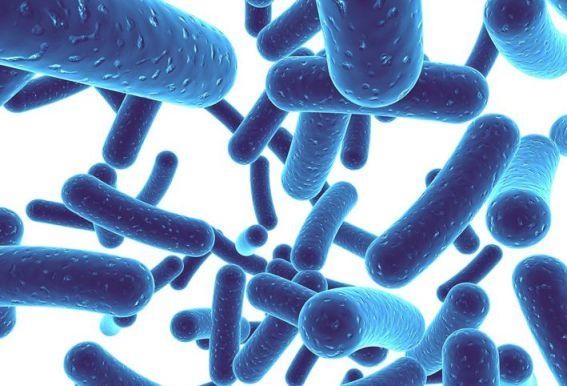 Эффективен ли для взрослых бифидумбактерин при вздутии живота
