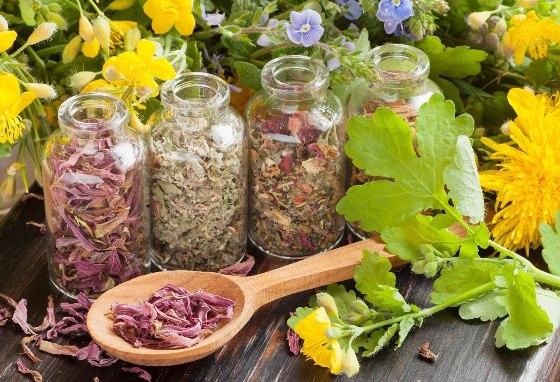 Травы для кишечника при вздутии и воспалении