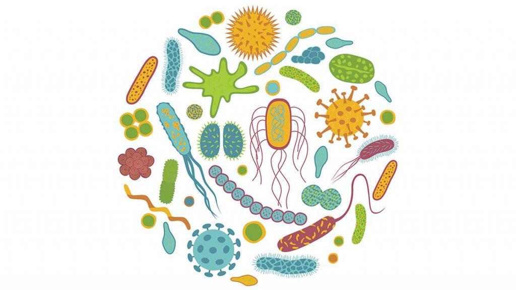 Выбираем лучшие пробиотики от вздутия живота