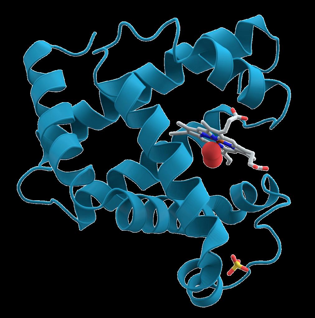 Вздутие живота от протеина: причины, что делать?